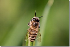 hoverfly-3454075_960_720